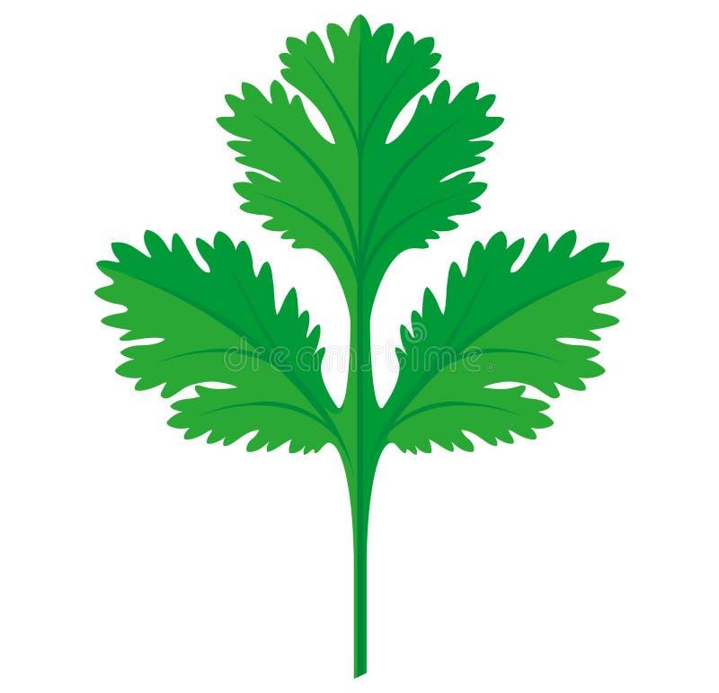 Ejemplo gráfico plano del vector de la hoja del coriandro o del cilantro, completamente ajustable y escalable libre illustration