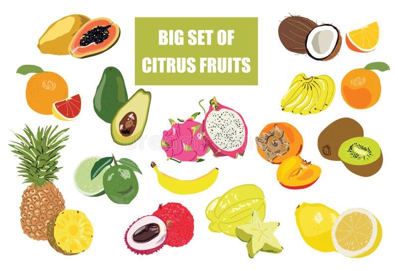 Ejemplo grande del garabato del sistema de la fruta aislado en el fondo blanco Iconos de la comida del vector stock de ilustración