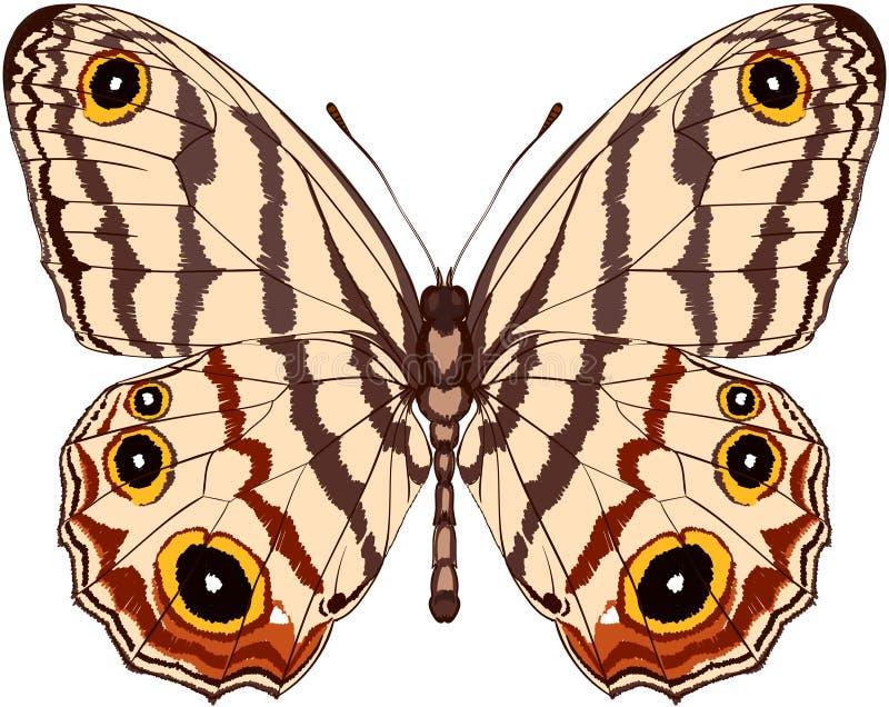 Ejemplo hermoso de la mariposa del vector para imprimir ilustración del vector