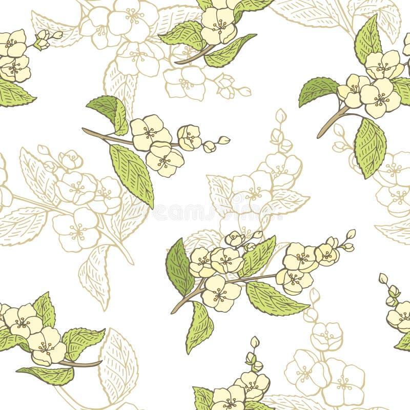 Ejemplo inconsútil del bosquejo del modelo del color gráfico de la flor del jazmín stock de ilustración
