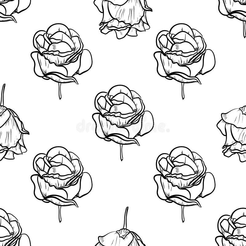 Ejemplo incons?til del vector del modelo de la rosa hermosa, flor de dibujo de la primavera aislada en el fondo blanco ilustración del vector