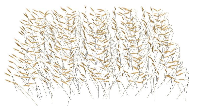 - Ejemplo industrial 3D de la vista lateral del paquete rendido de campo de la espiga del trigo aislado en el fondo blanco - agri fotografía de archivo libre de regalías