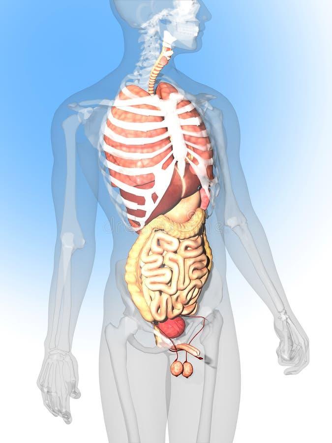 Vistoso B Anatomía Ciencia Médica Bandera - Anatomía de Las ...