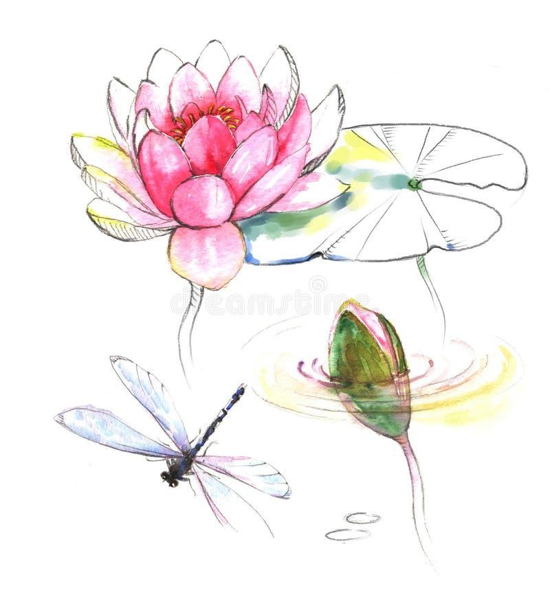 Ejemplo a mano de la acuarela de la libélula con la flor, el brote y las hojas del rosa del loto ilustración del vector