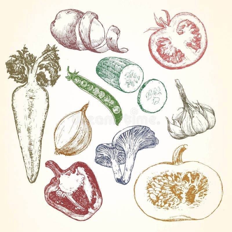 Ejemplo a mano de las verduras y de las frutas, vector ilustración del vector