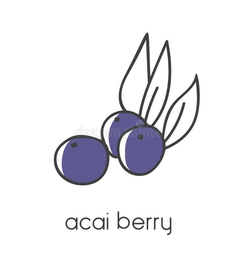 Ejemplo moderno del vector de una baya de Acai del superfood ilustración del vector