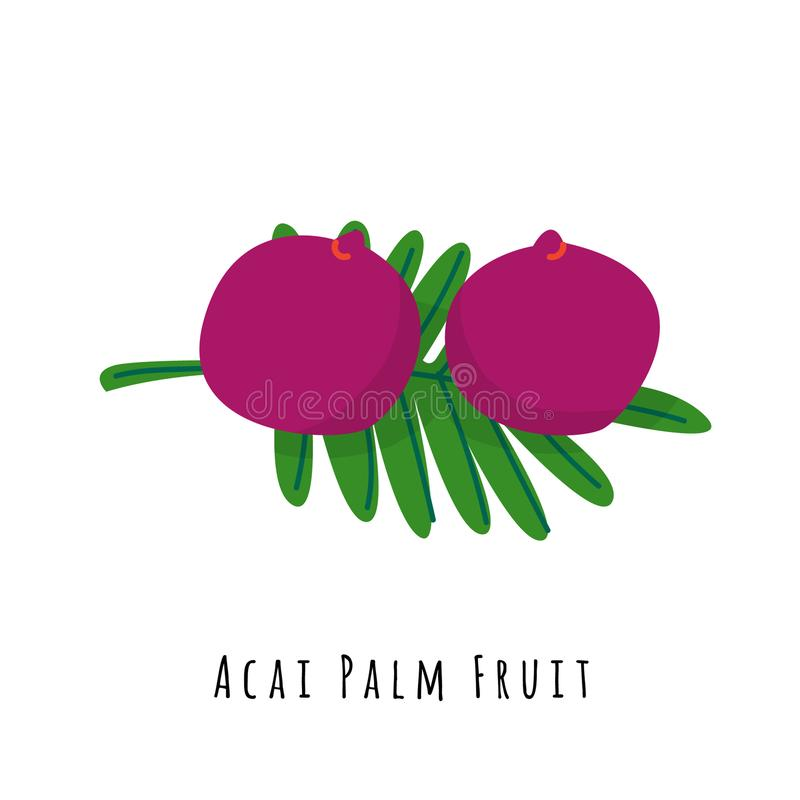 Ejemplo plano del vector de la fruta de la palma de Acai ilustración del vector