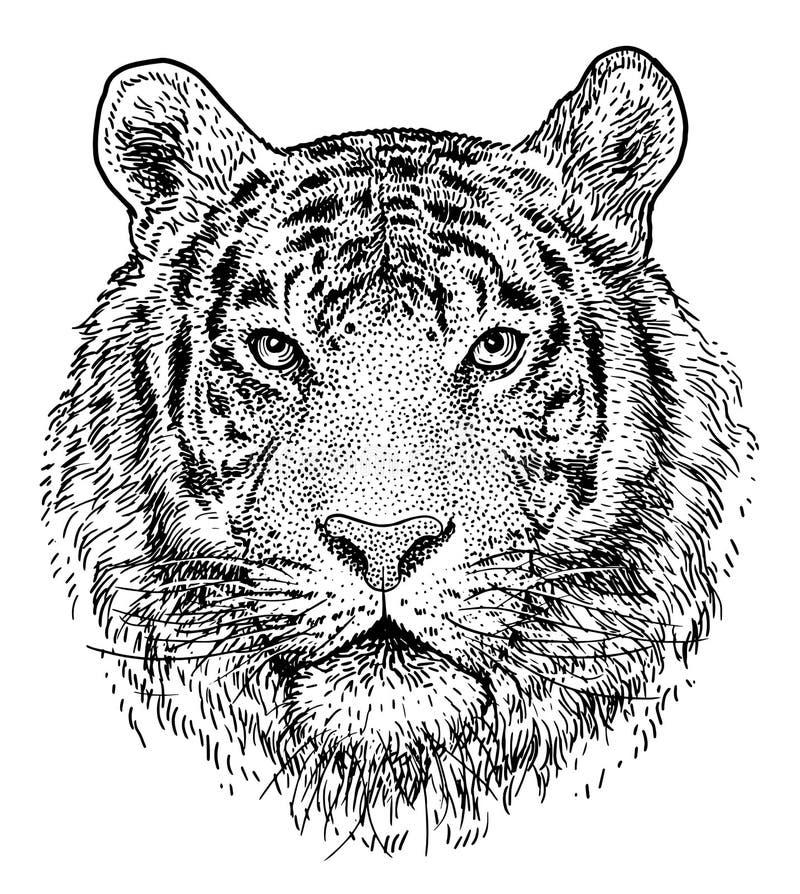 Ejemplo principal del tigre, dibujo, grabado, tinta, línea arte, vector stock de ilustración
