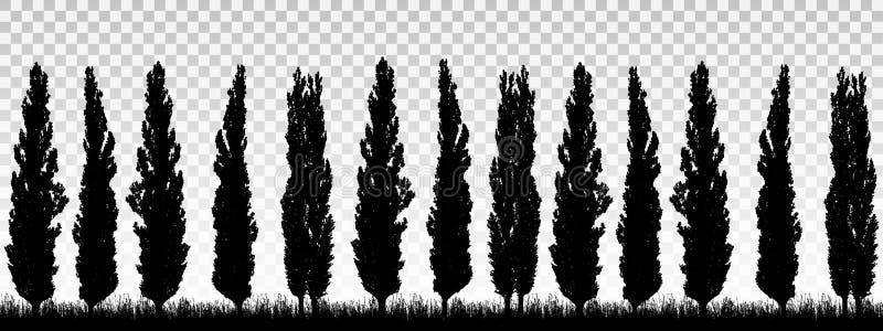 Ejemplo realista de un guarda-brisa de una fila de los árboles de álamo con la hierba y el espacio para el texto Aislado en fondo ilustración del vector