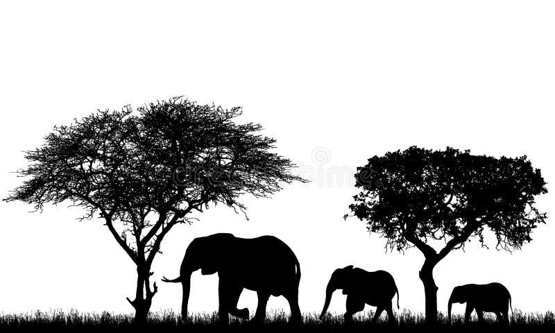 Ejemplo realista del paisaje con los árboles en safari africano Una familia de tres elefantes con un bebé entra en la hierba, vec ilustración del vector