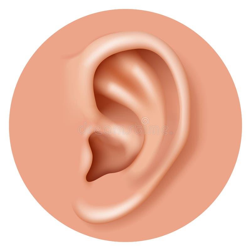 Ejemplo realista del vector del diseño del icono 3d de la atención sanitaria humana de la audiencia del órgano del oído del prime stock de ilustración