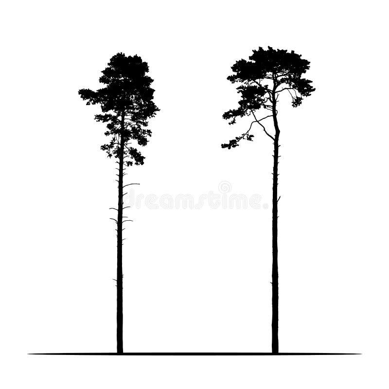 Ejemplo realista determinado de dos árboles de pino coníferos altos Aislado en el fondo blanco, vector libre illustration