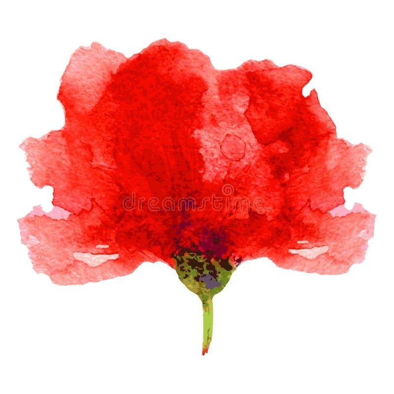 Ejemplo rojo de la acuarela de la flor de la amapola aislado en el fondo blanco, pintura artística dibujada mano del vector para  stock de ilustración