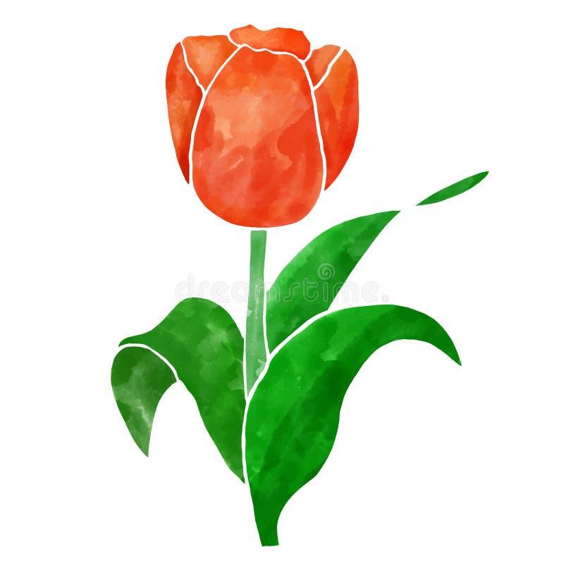 Ejemplo rojo del vector de la flor del tulip?n con textura de la acuarela libre illustration