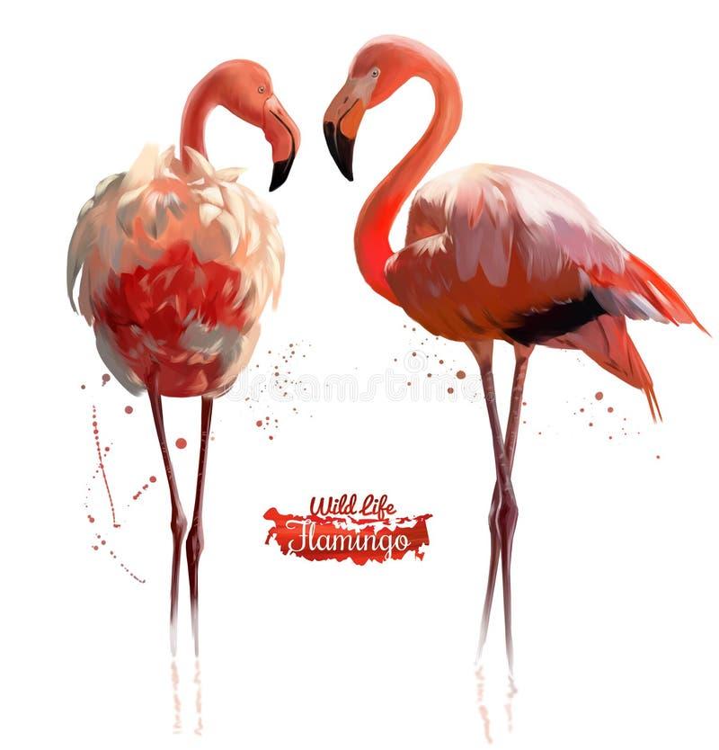 Ejemplo rosado de la acuarela del flamenco libre illustration