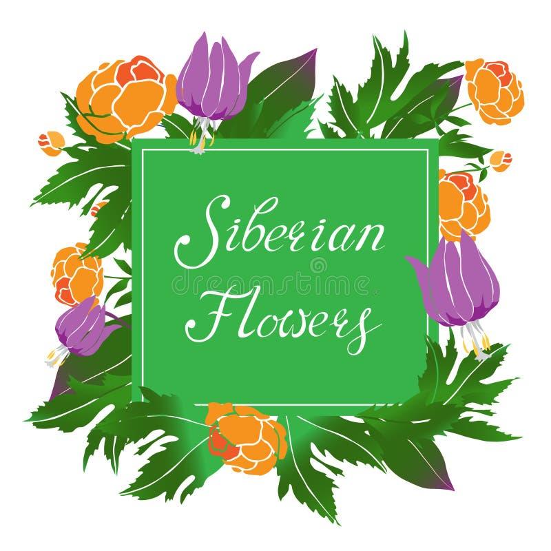 Ejemplo siberiano del vector de las flores con un marco foto de archivo