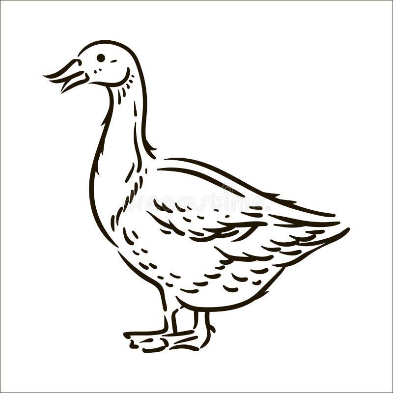 Ejemplo simple del bosquejo del ganso exhausto de la mano del vector en el fondo blanco libre illustration
