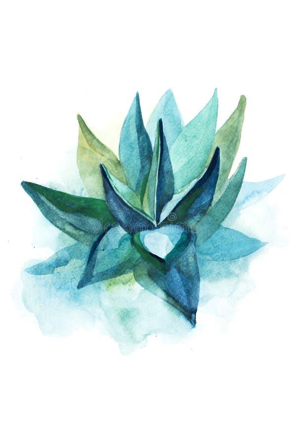 Ejemplo suculento de la acuarela de la flor de la planta del áloe del cactus ilustración del vector