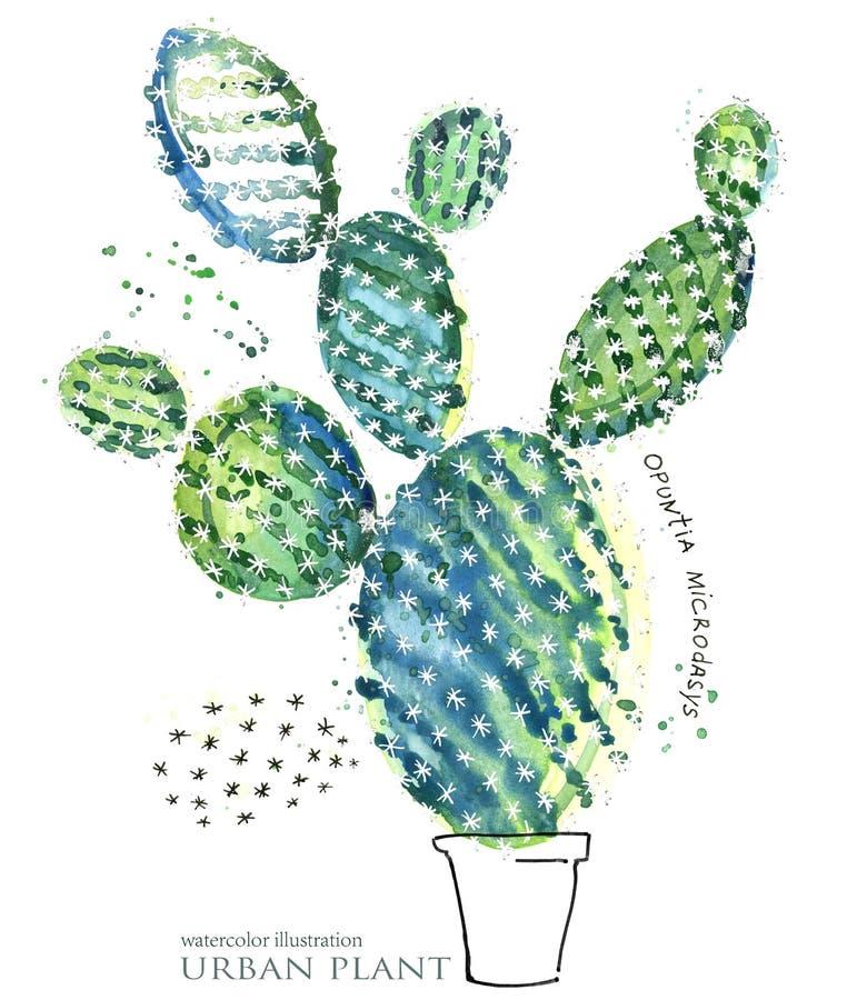 Ejemplo suculento de la acuarela de la planta stock de ilustración