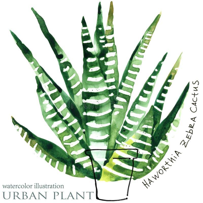 Ejemplo suculento de la acuarela de la planta ilustración del vector