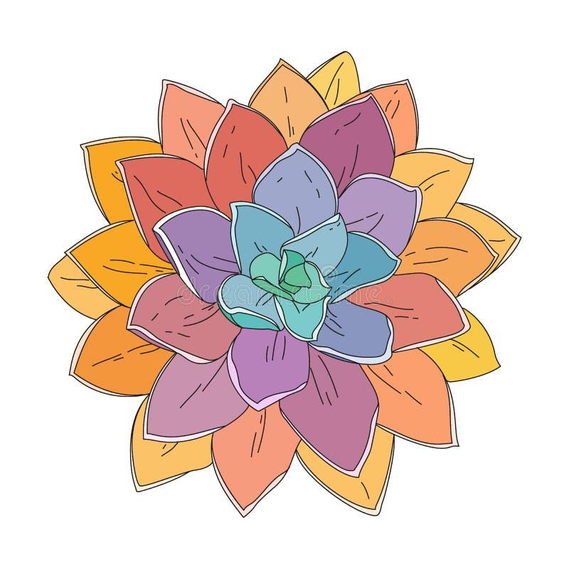 Ejemplo suculento del garabato, planta tropical dibujada mano, ilustración del vector