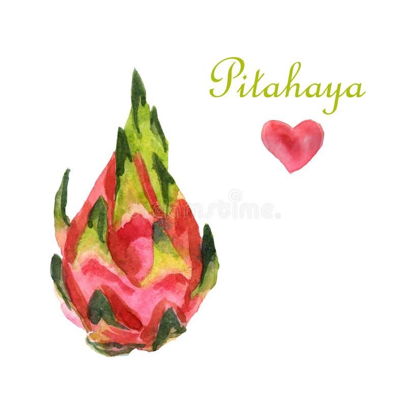 Ejemplo tropical de la acuarela con pitahaya en un fondo blanco stock de ilustración