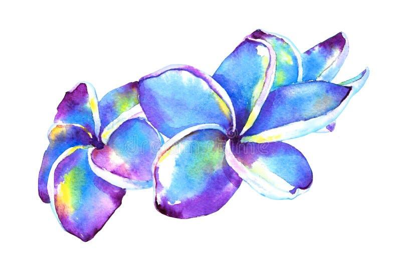 Ejemplo tropical del plumeria ilustración del vector