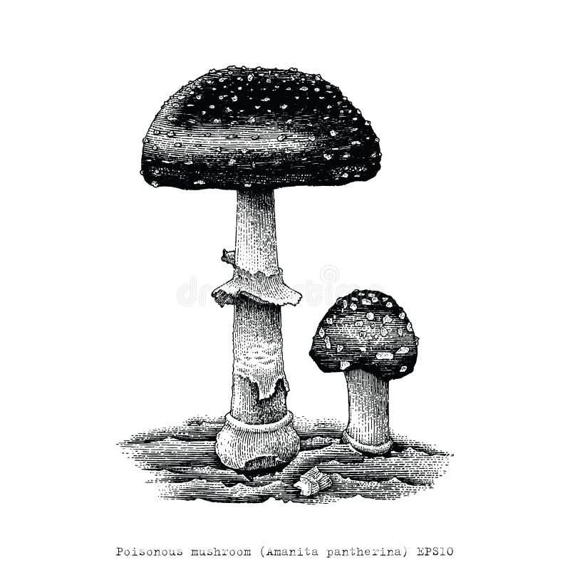 Ejemplo venenoso del grabado del dibujo de la mano de la seta stock de ilustración