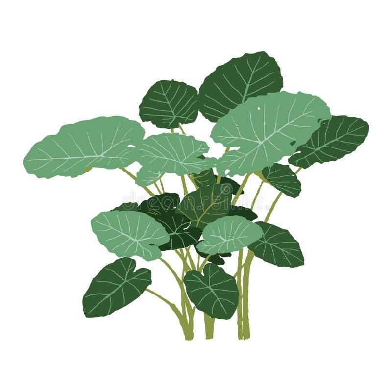 Ejemplo verde aislado del vector de la planta tropical para el arquitecto stock de ilustración