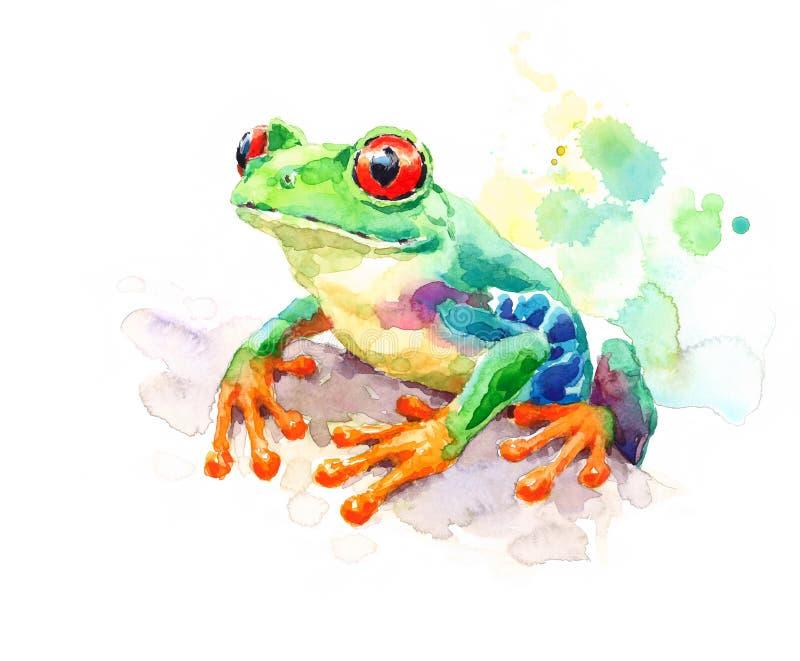 Ejemplo verde observado rojo de la naturaleza de la acuarela de la rana arbórea pintado a mano ilustración del vector
