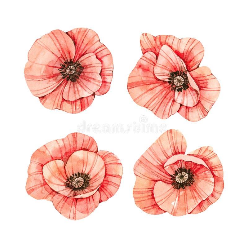 Ejemplos bot?nicos de la acuarela Flor rojo fresco de la amapola Colecci?n de las flores salvajes Perfeccione para casarse las in stock de ilustración