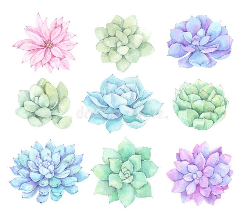 Ejemplos de la acuarela - clipart de los succulents Suculento ilustración del vector