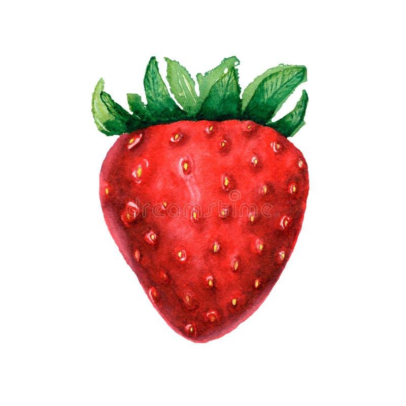 Ejemplos de la baya del postre Fresa de la acuarela Imagen aislada de la baya en el fondo blanco Comida vegetariana ilustración del vector