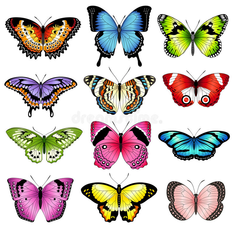 Ejemplos de la mariposa del color del vector ilustración del vector
