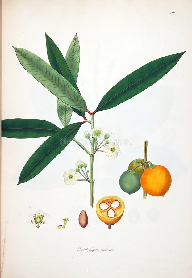 Ejemplos de la planta libre illustration
