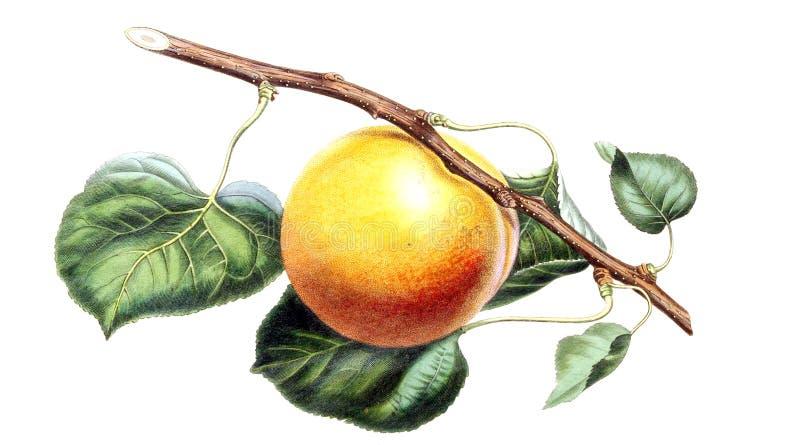 Ejemplos de la planta stock de ilustración
