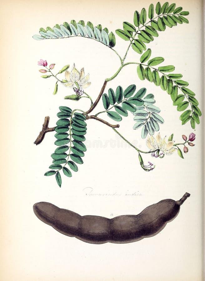 Ejemplos de la planta imagenes de archivo