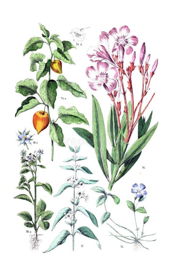 Ejemplos de la planta imágenes de archivo libres de regalías