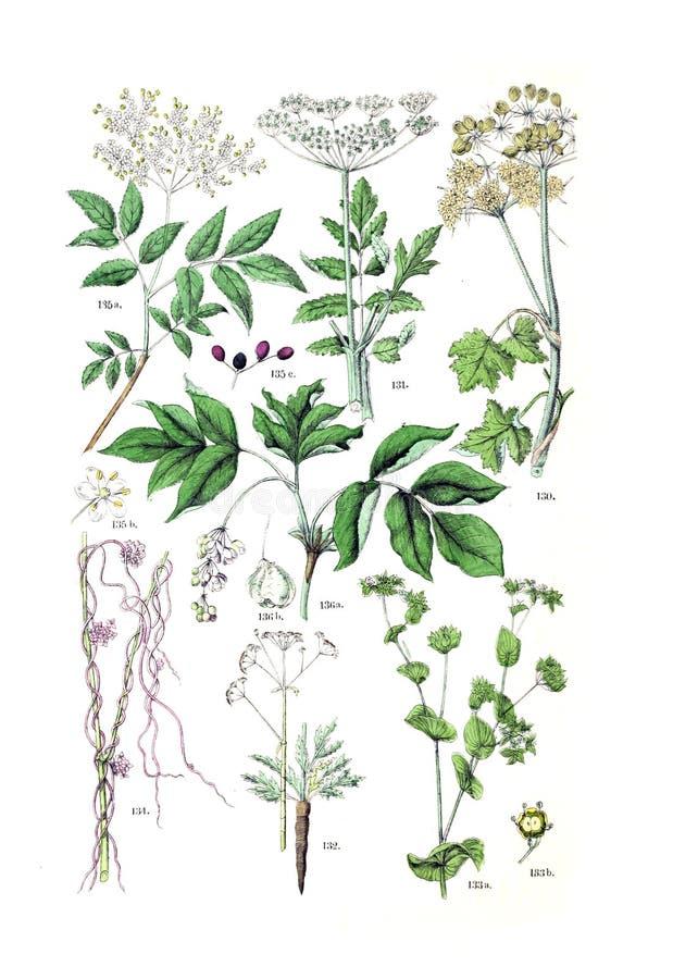 Ejemplos de la planta imagen de archivo libre de regalías
