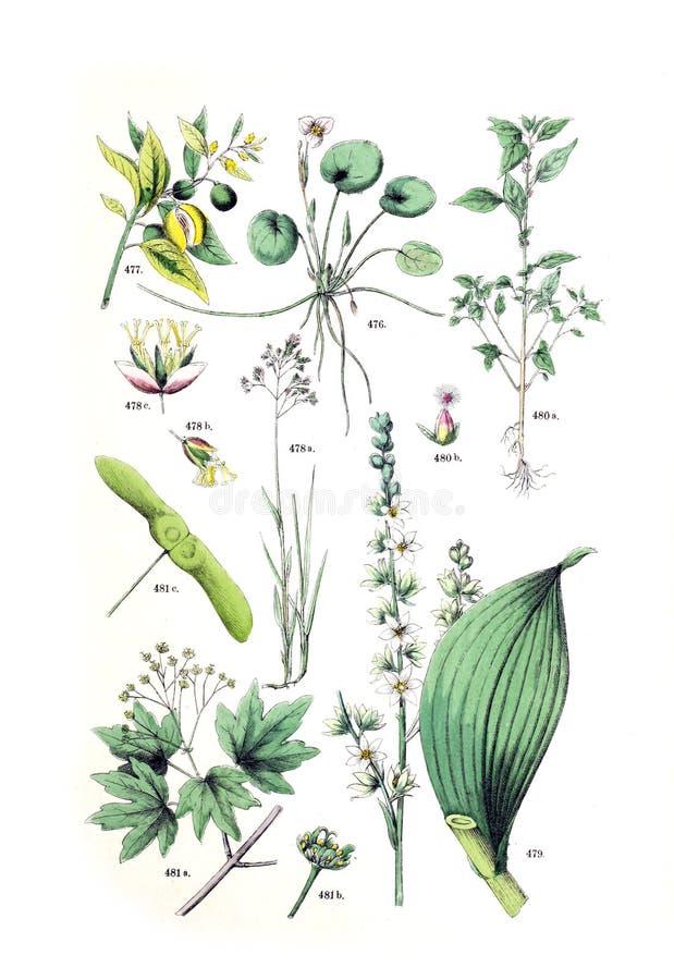 Ejemplos de la planta fotos de archivo libres de regalías