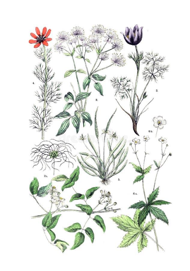 Ejemplos de la planta imagen de archivo