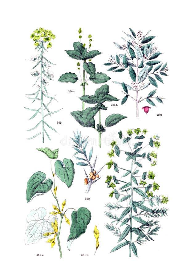 Ejemplos de la planta fotografía de archivo libre de regalías