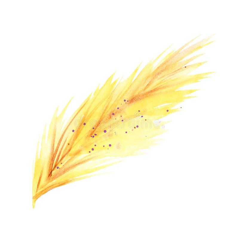 Ejemplos de la pluma del boho de la acuarela Sistema del clip art de Pascua, aislado en el fondo blanco ilustración del vector