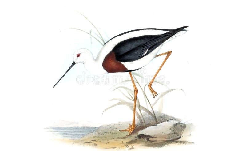 Ejemplos del animal ilustración del vector