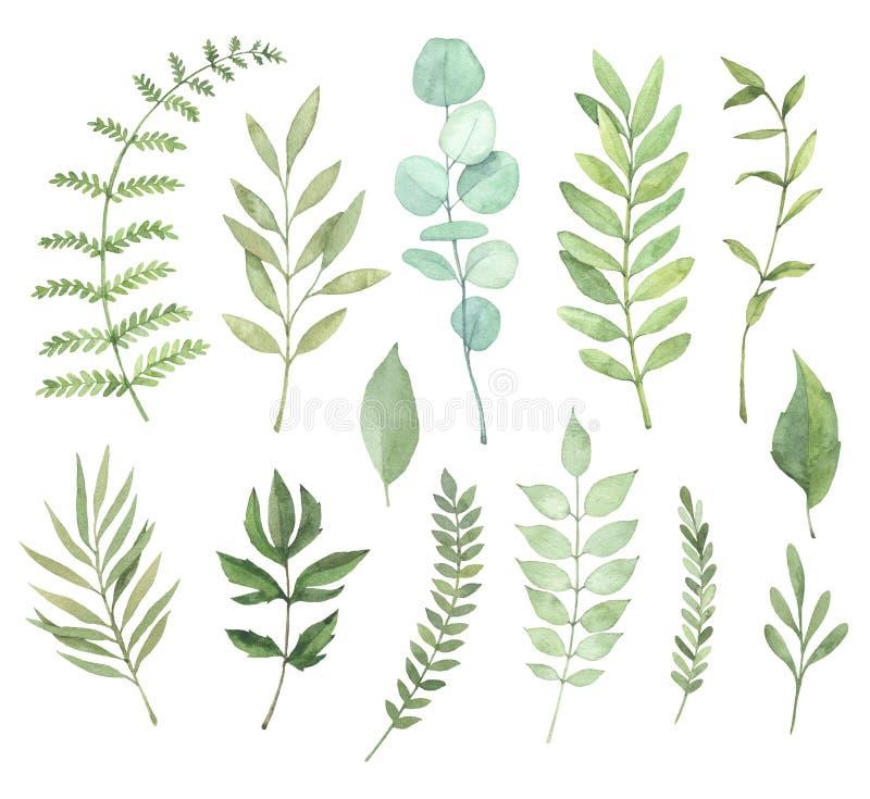 Ejemplos dibujados mano de la acuarela Clipart botánico Sistema de g ilustración del vector