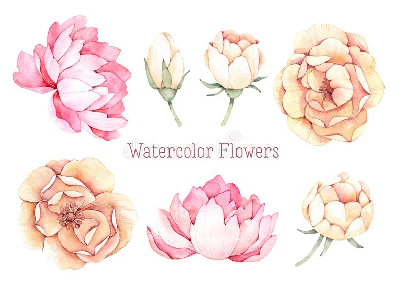 Ejemplos dibujados mano de la acuarela Flores rosadas y amarillas el PE stock de ilustración