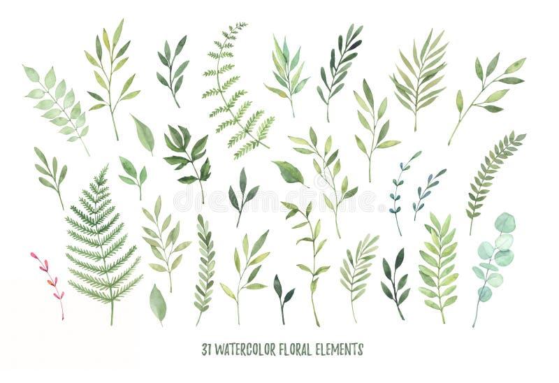 Ejemplos dibujados mano de la acuarela Laureles botánicos del clipart stock de ilustración
