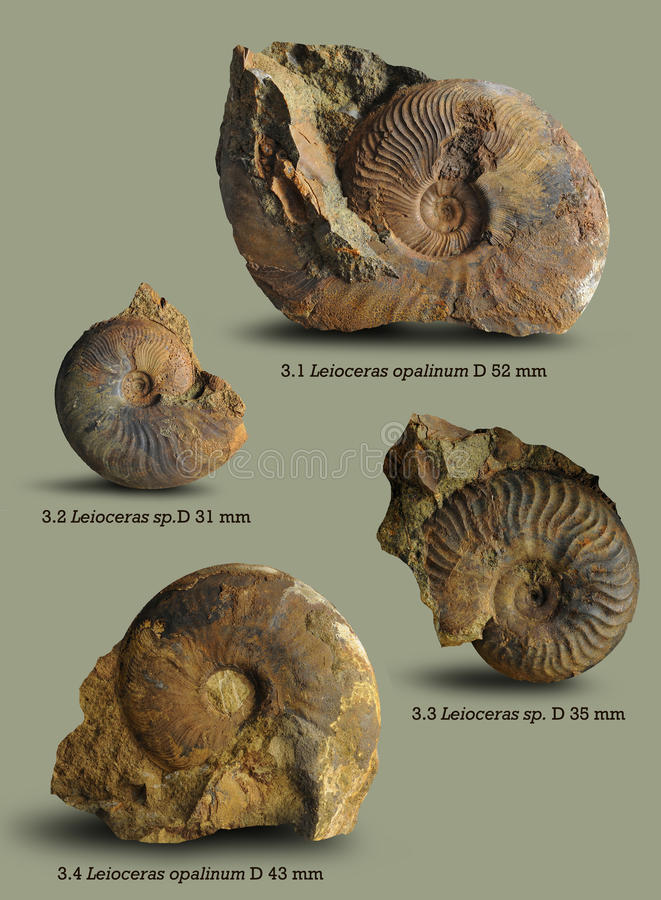 Ejemplos para el libro en la paleontología fotos de archivo libres de regalías