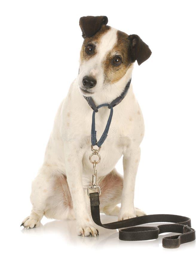 Ejercicio del perro fotografía de archivo