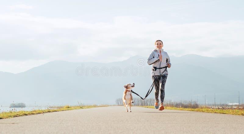 Ejercicios soleados brillantes de Canicross de la ma?ana Funcionamientos femeninos con su perro del beagle y sonrisa feliz fotos de archivo